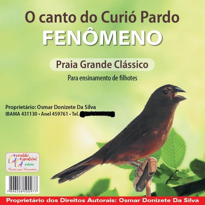 CD - Curió Pardo Fenômeno