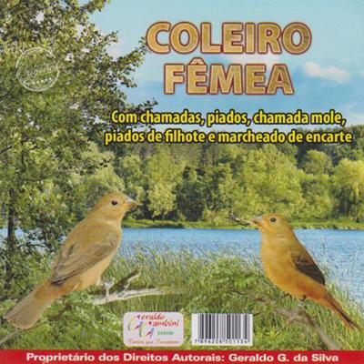CD - Coleiro Fêmea
